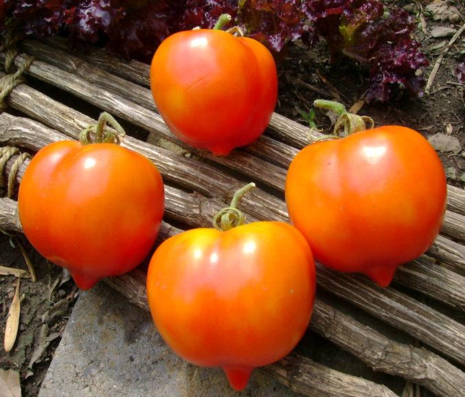 My Personal Favorites  Heirloom tomato