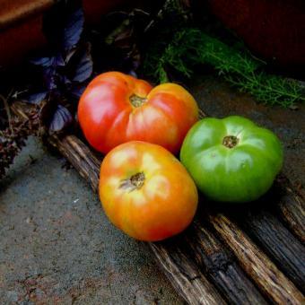Alpine Glow tomato seeds
