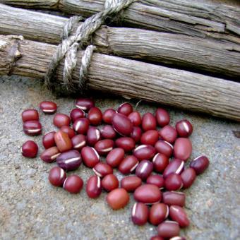 Azuki Adzuki Beans Seeds Vigna angularis
