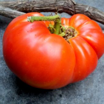 Heirloom Tomato from Carolyn Male Don Camillo