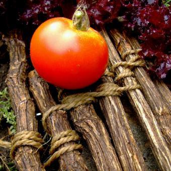 Gimar Tomato Seeds