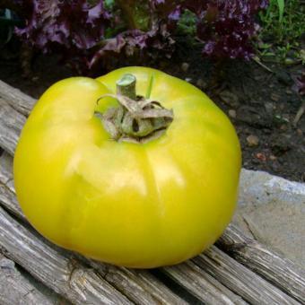 Grunt's Gold Tomato