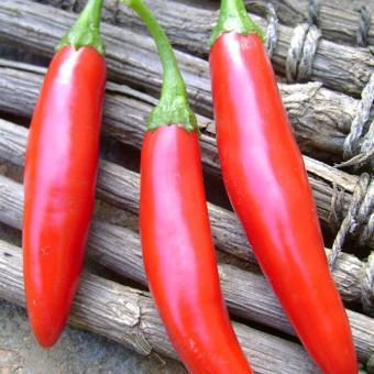 Thai Long Sweet Pepper rare chili seeds