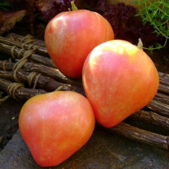 Pink Flamingo Heirloom Tomato Seeds