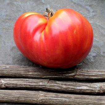 Raspberry Harvest Heirloom Tomato Seeds