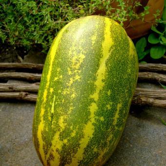 Thai Melon