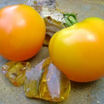 Amber Tomato Seeds