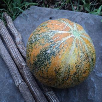 Ananas D'Amerique Melon rare heirloom seeds