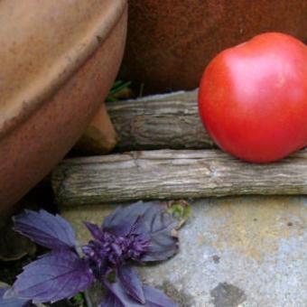 Arequipa Tomato Seeds