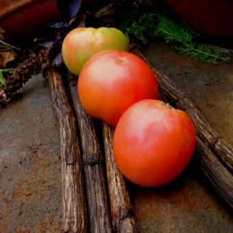 Big Apple tomato seeds Jabucar Krupen