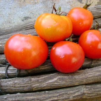 Blackhawk heirloom tomato seeds