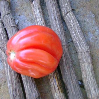 Etoile Tomato Seeds