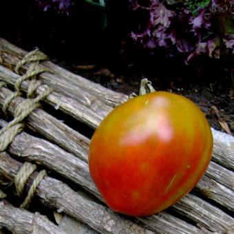 Everett's Rusty Oxheart Heirloom Tomato Seeds