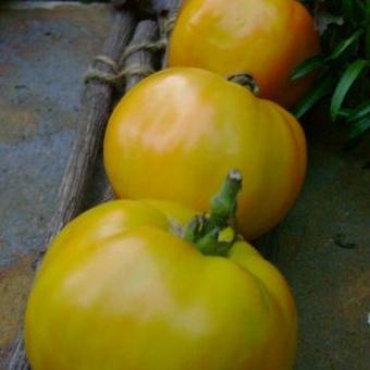 Exotic Fruit Tomato Seeds