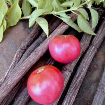 Hikari Tomato Seeds
