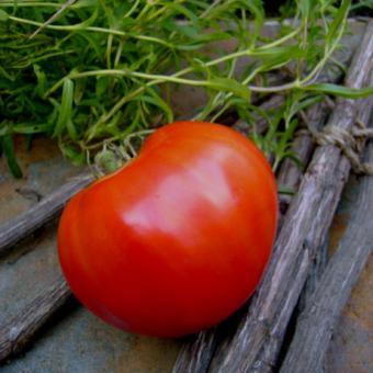 Jet Star Hybrid tomato seeds