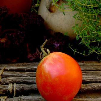 Krasnodar Titans Heirloom Tomato Seeds