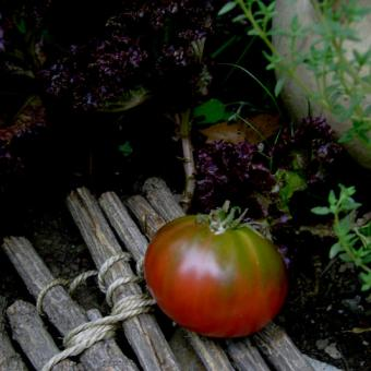 Lila Sari Heirloom tomato Seeds