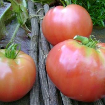 Liz Birt Tomato Seeds