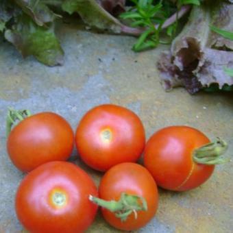 Machu Picchu tomato seeds