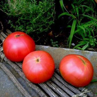 Mikado Pink Heirloom Tomato Seeds
