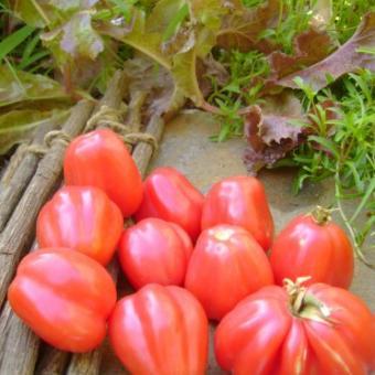 Rare Ovita Tomato Seeds