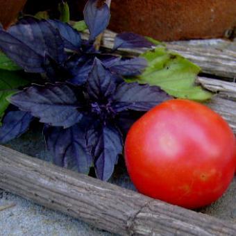 Ozark Pink Tomato Seeds