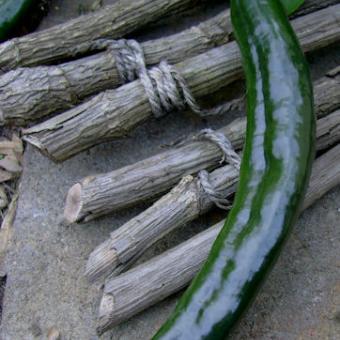 Pasilla Bajio heirloom pepper chili