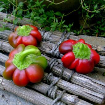 Shumenski Rotund Heirloom Pepper Seeds