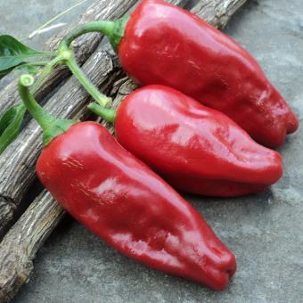 Santa Rosa Pepper seeds