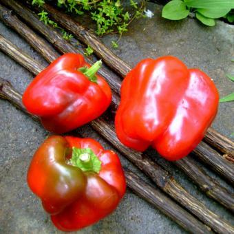 Que Mein Pepper Seeds Shanghai Bell Pepper