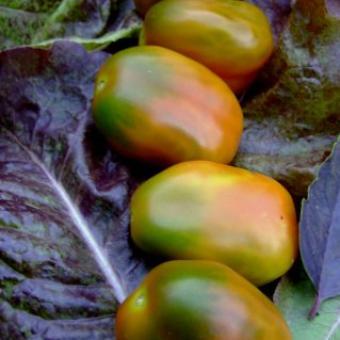 Plum Bush Tomato Seeds