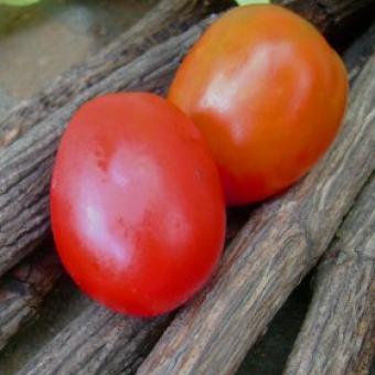 Pravda tomato seeds