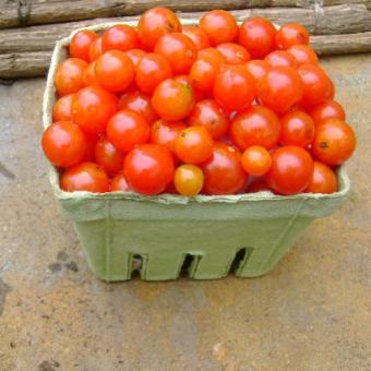 Sugar cherry tomato seeds