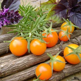 Heirloom Sun Gold F1 Tomato Seeds