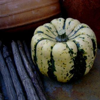 Sweet Dumpling Squash heirloom vegetable seeds