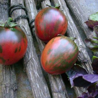 Vernissage Black Tomato Seeds