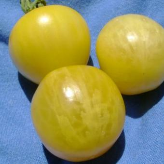 Vernissage Yellow Tomato Seeds