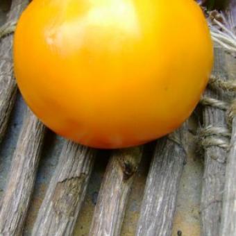 Woodle Orange Tomato Seeds