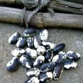 Orca heirloom Beans