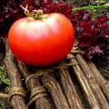 Henryka Heirloom Tomato Seeds