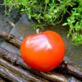 Red Tomato of Montlhery heirloom seeds
