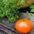 St. Pierre Saint Pierre Heirloom Tomato Seeds