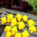 Trinidad Perfume Pepper Heirloom seeds