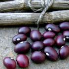 Bola Roja Bean seed