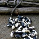 Orca Beans seeds