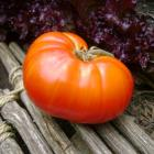 Tomato Bear Paw Medvezhiya Lapa