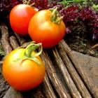 Black and Sweet Tomato Seeds