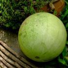 Mickylee Watermelon