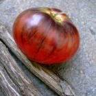 Ozark Sunrise Tomato Seeds